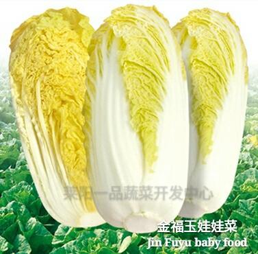 烟台莱阳市 韩国金福玉娃娃菜种子