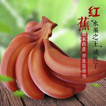 南靖县爱曦果蔬专业合作社红皮香蕉红香蕉红美人香蕉