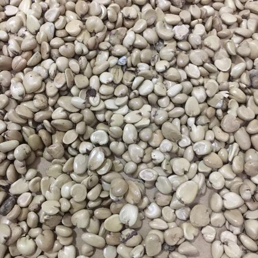 吉安遂川县黑老虎种子 提供种植技术全程指导