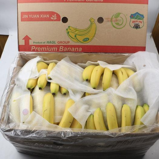 北京菲律宾香蕉 七成熟 40斤以下