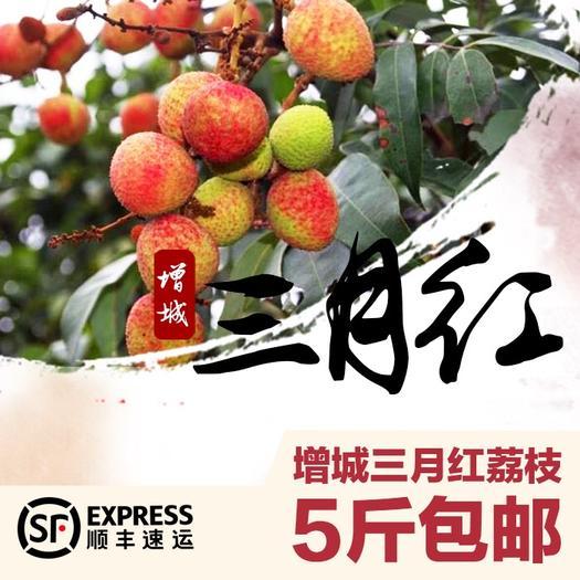 廣州三月紅荔枝 2cm