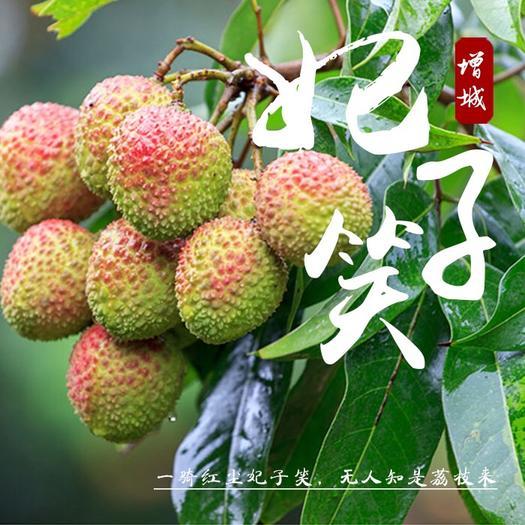 广州增城区妃子笑荔枝 2cm