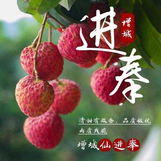 广州增城区仙进奉茘枝 2cm