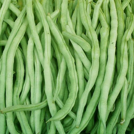北海合浦縣白條四季豆 20cm以上