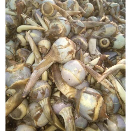 南通海安市白肉慈菇 20~30g