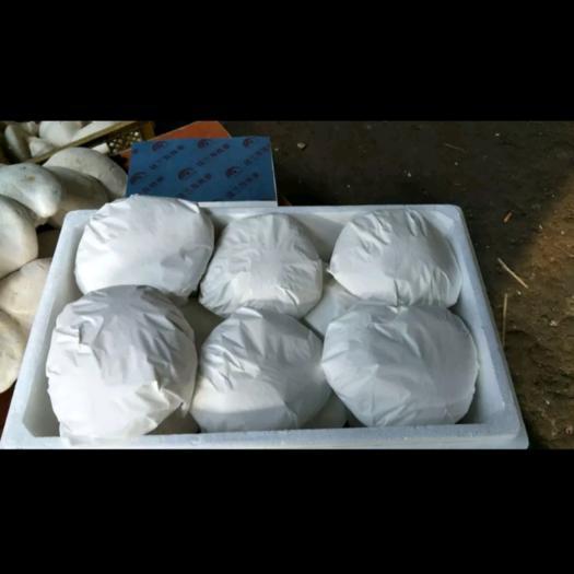 新疆维吾尔自治区乌鲁木齐市天山区白灵菇 人工种植 鲜货
