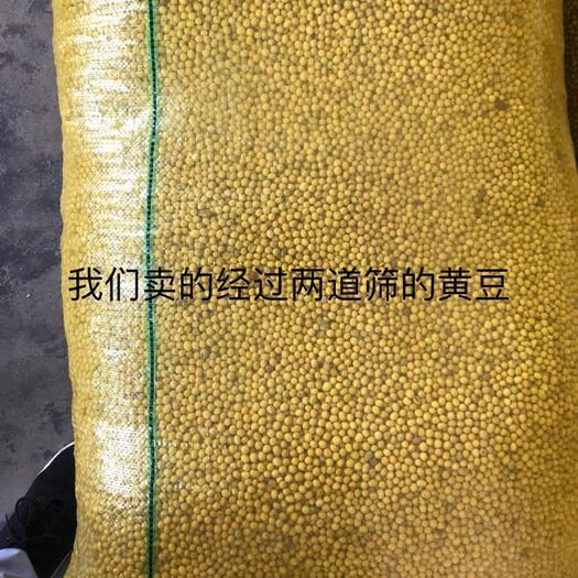 荆州洪湖市小粒黄豆 生大豆 1等品