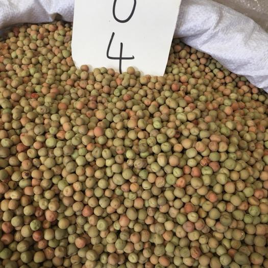 成都豌豆尖 10-12cm 饱满