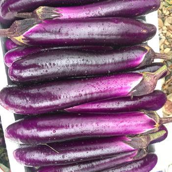 紫红茄霸王 3两以上