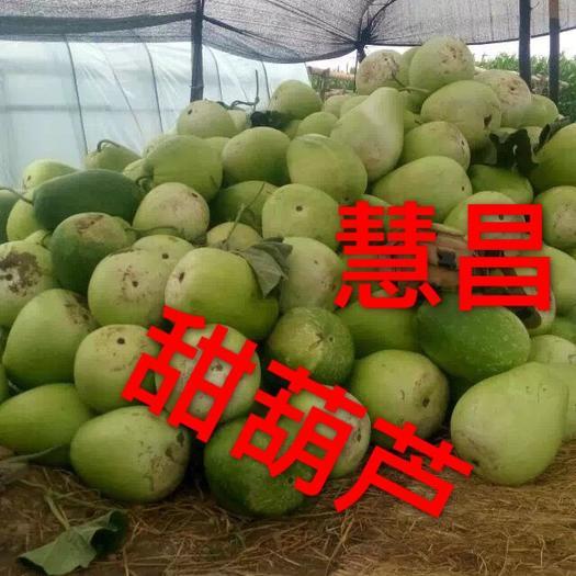 黑龙江省牡丹江市宁安市菜葫芦
