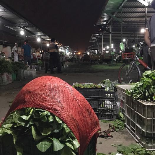 四川省成都市金牛区大叶木耳菜 绿色