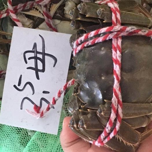 兴化市兴化大闸蟹 2.5两 母蟹