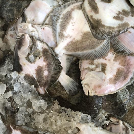 常州鸦片鱼