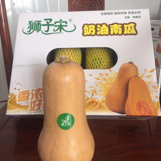 潍坊寿光市奶油南瓜 1~2斤 长条形