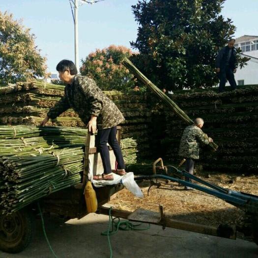 钟祥市 2.2米 3米 菜架竹 长期供应 质量保证