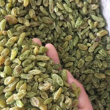 19年新货全国包邮 新疆特产葡萄干吐鲁番绿免洗葡萄干无核葡萄