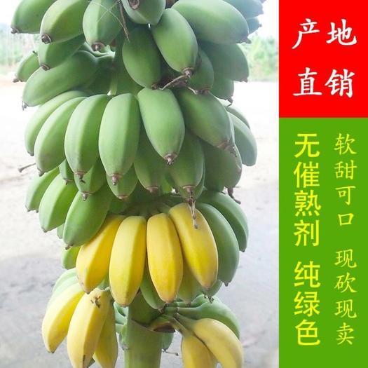南靖县苹果蕉 八成熟