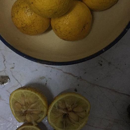 西安蓮湖區香櫞 枳橙