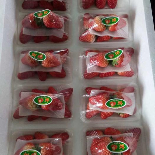 東港市九九草莓 十合一丹東量大從優保質保量四斤五斤六斤裝尋求合作伙伴