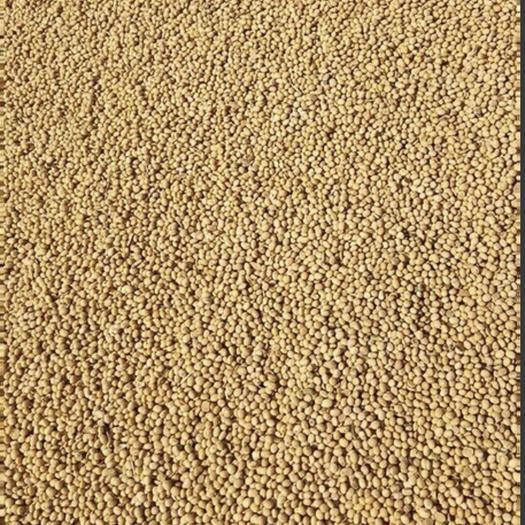 阳信县齐黄34黄豆 1等品 生大豆