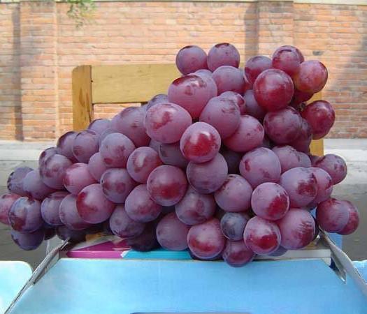 海阳市美国红提 5%以下 1次果 0.4-0.6斤