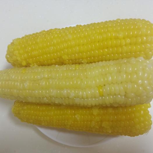 佳木斯速冻糯玉米 12-18个月