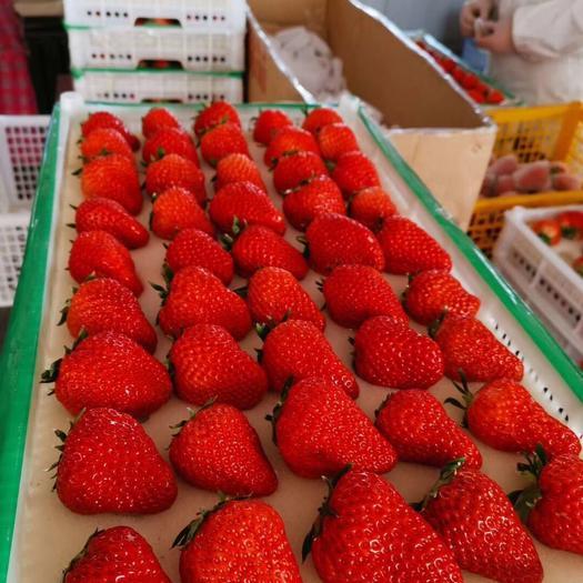 丹東九九草莓 50克以上