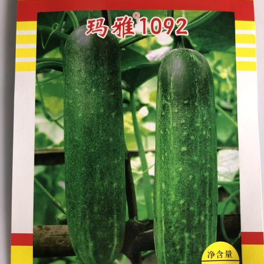 平远县 泰国进口杂交黄瓜玛雅1092 水果黄瓜 粉瓜 华南型黄瓜种子