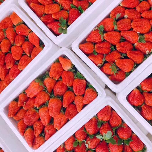 丹東九九草莓 40克以上