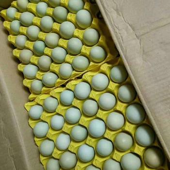 绿壳鸡蛋 大码双色绿壳蛋