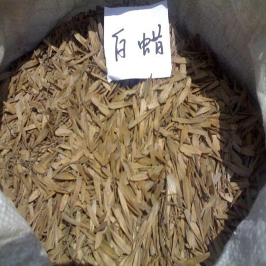 绛县白蜡种子