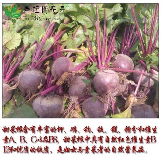 宿迁沭阳县甜菜种子