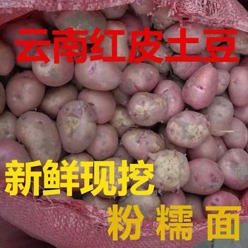 新鲜小土豆农家自种蔬菜云南红皮黄皮黄心土豆马铃薯洋芋9斤