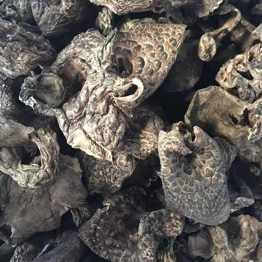 云南省迪庆藏族自治州香格里拉市虎掌菌 纯野生菌
