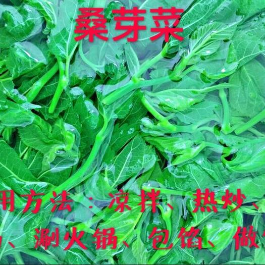 广东省清远市英德市桑芽 人工种植 混装通货