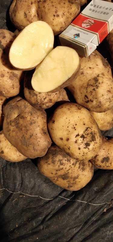 尤金885土豆 3两以上
