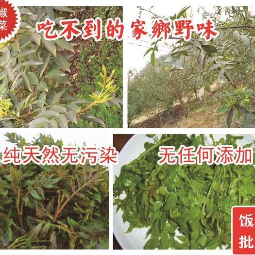 重庆市璧山区花椒芽 人工种植 5cm以下