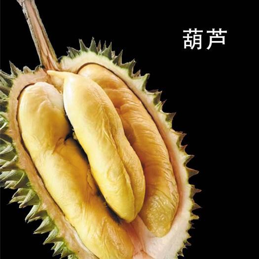 江苏省南京市浦口区葫芦 1.5斤以上