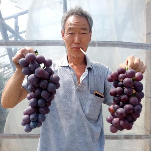 衡水紫藤葡萄 1.5- 2斤 5%以下 1次果