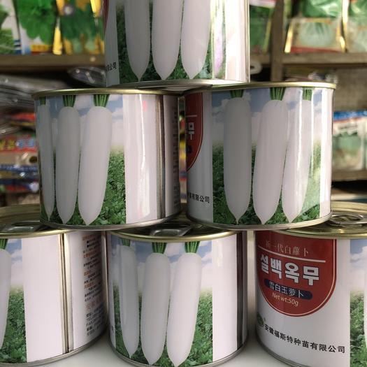 梅州平远县 白萝卜种子韩国进口杂交一代雪白玉春萝卜 瓶装50克