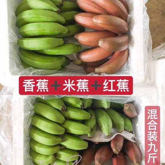 南宁西乡塘区 香蕉小米蕉美人蕉芭蕉 随机混装净果9斤装【包邮】