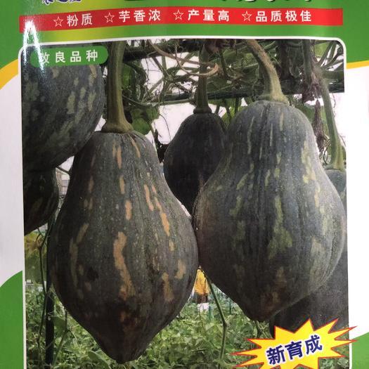 平远县 香芋南瓜种子