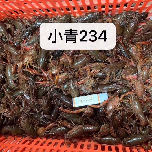 潜江市 4-7日湖北潜江小龙虾,2-4规格青虾报价,欢迎咨询下单
