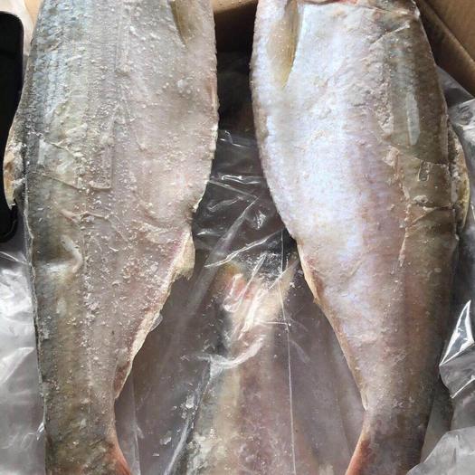 上海杨浦翘嘴鲌鱼 白力鱼