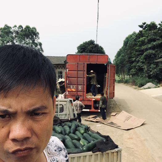 南宁西乡塘区黑皮冬瓜 2020广西坛洛,金光大量供应黑皮地瓜