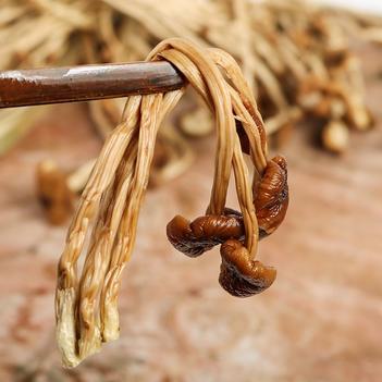 新货不开伞茶树菇干货批发 古田茶薪菇一手货源产地