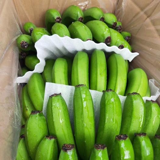 东方市 香蕉 海南巴西香蕉