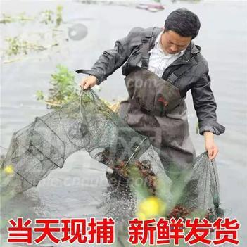 监利小龙虾 8月14日到货价 小青13元 中青21元 大青32元