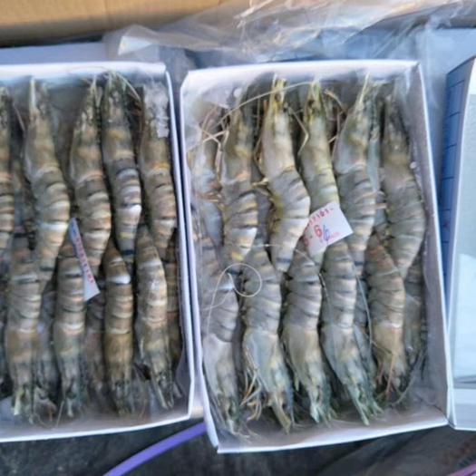 大连金州区虾虎鱼 批发进口大虾