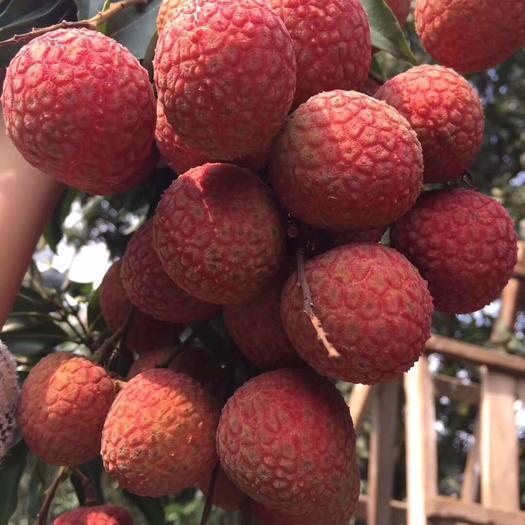 茂名高州市 荔枝鲜果 高州当季荔枝白糖罂妃子笑 中国荔枝之乡